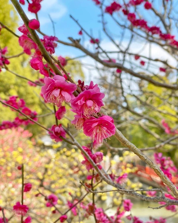 「春よ来い」02/25(木) 04:25   翠(みどり)の写メ日記