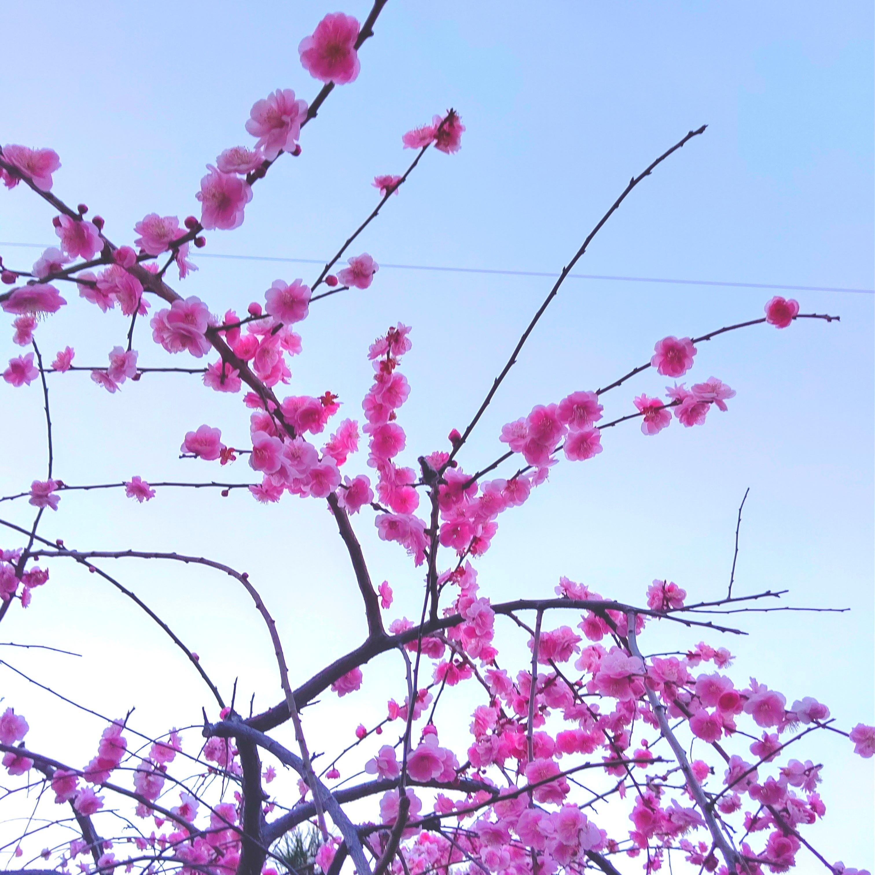 「立春を過ぎ、」02/27(土) 19:19 | 橘ののの写メ日記