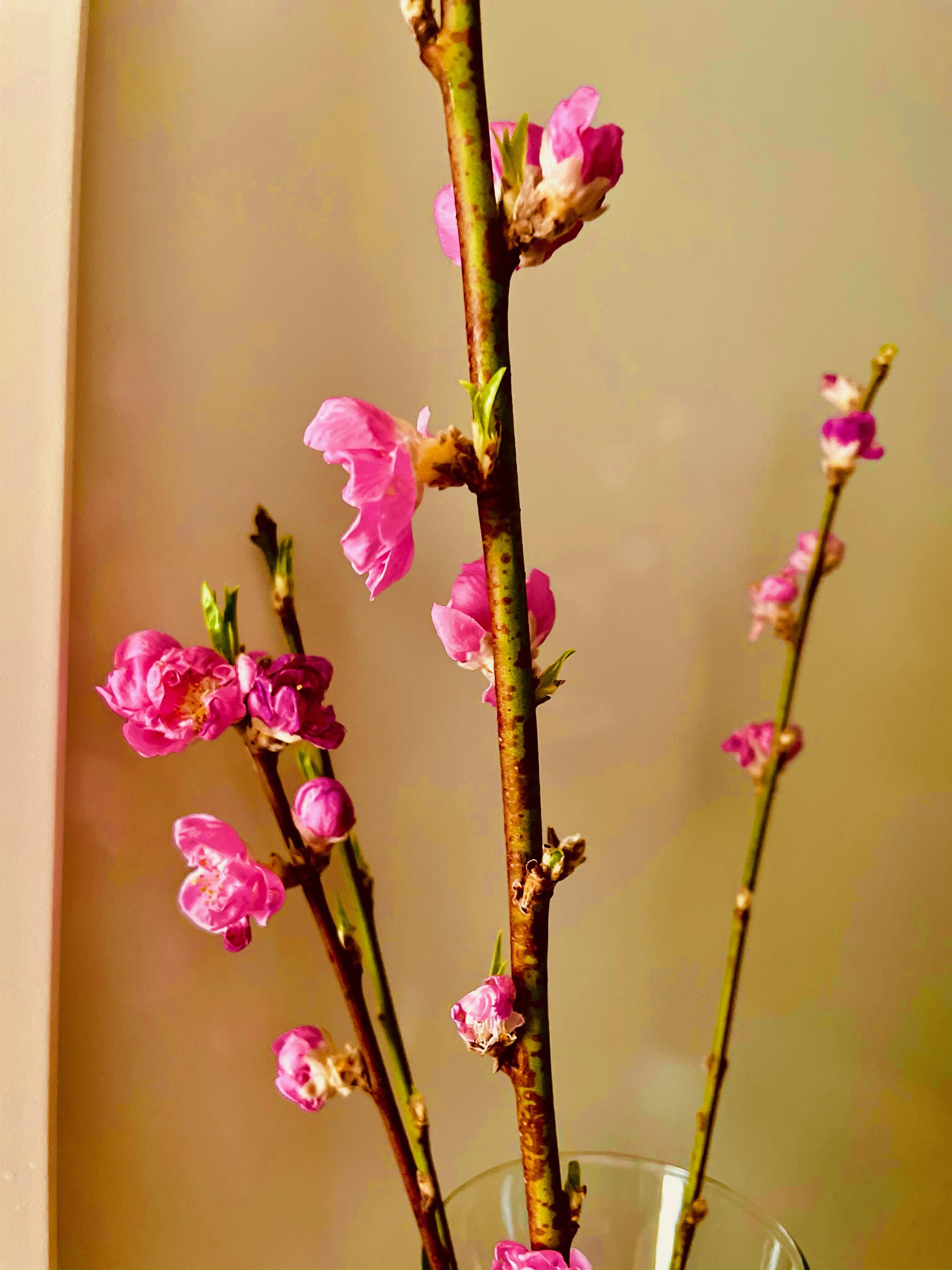 「梅の花?」02/28(日) 17:09 | 梨花(りんか)☆S-rankの写メ日記