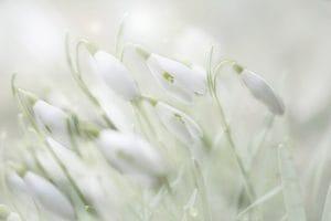 「出勤✨」06/11(金) 18:08   一条 美蘭-MIRAN-の写メ日記