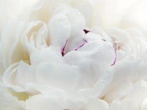 「出勤❤︎」06/12(土) 14:26   一条 美蘭-MIRAN-の写メ日記