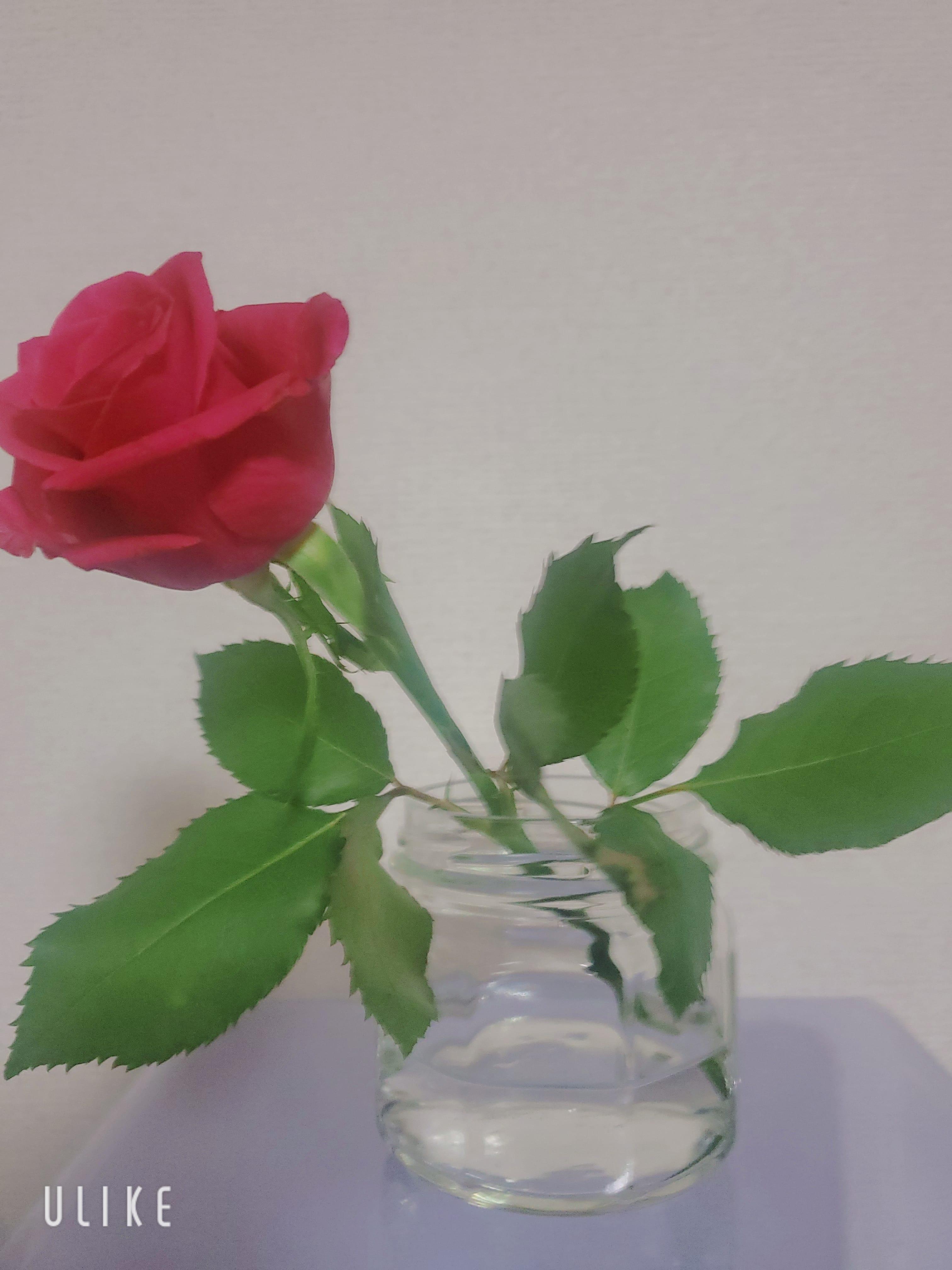 「ありがとうございます」09/09(木) 01:05   鈴木ひかるの写メ日記