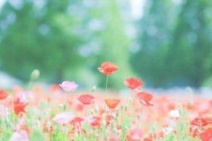 「17時より❤︎」09/17(金) 03:41   双葉 詩音-SHION-の写メ日記