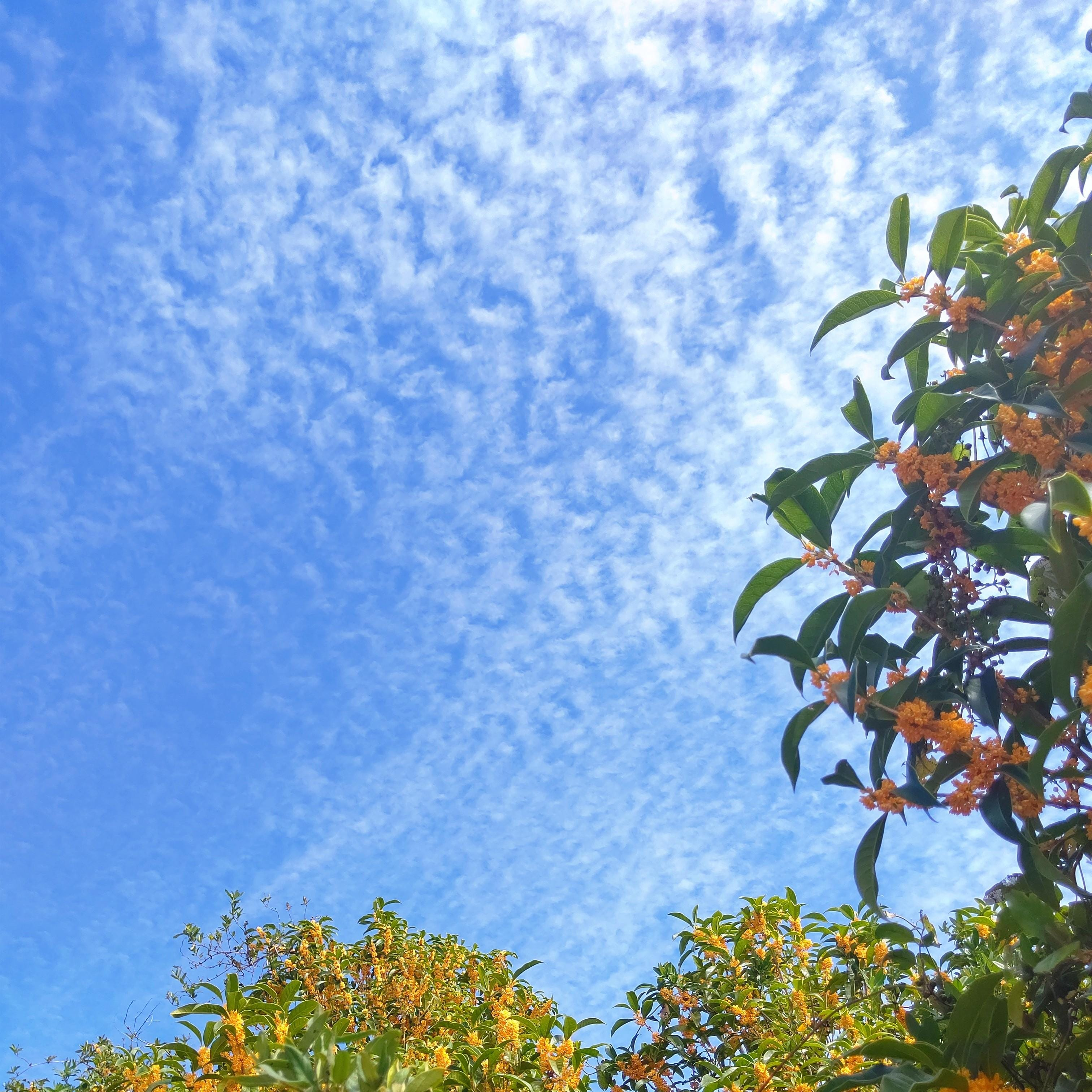 「金木犀」10/09(土) 21:22   橘ののの写メ日記
