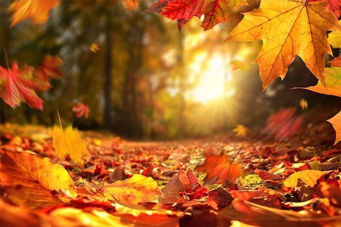 「秋!」10/14(木) 11:29 | 望月(もちづき)の写メ日記